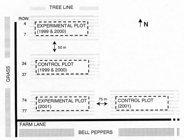 Field layout of the eggplant plots in Quebec, 1999, 2000 and 2001.