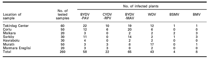 Number of virus infected plants in tested wheat samples in Tekirdag, Turkey in 2003