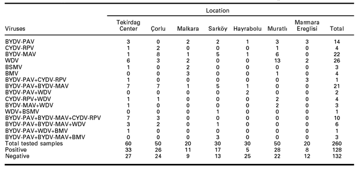 Infection types of cereal viruses in tested wheat samples in seven counties in Tekirdag, Turkey in 2003