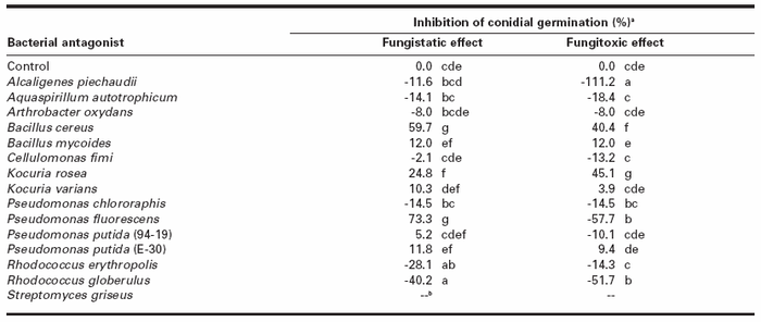 Effect of culture filtrates from bacterial antagonists on conidial germination of Helminthosporium solania Inhibition of conidial germination was calculated as follows: [(Number of germinated conidia in the control - Number of germinated conidia in the filtrate) / Number of germinated conidia in the control] x 100. Each value represents the mean of three replicates. Numbers within a column followed by a same letter are not significantly different according to Fisher's protected LSD test (P < 0.05). Negative values mean stimulation of conidial germination.b Not determined.