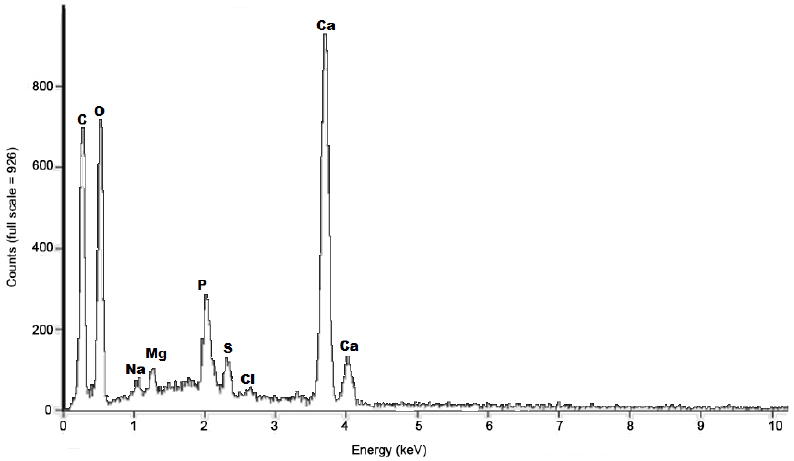 Energy dispersive X-ray spectrum of raw shrimp shell particles (particle size < 500 μm)