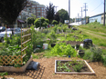 Plots in the Pine Street Community Gardens have many different aesthetic styles.