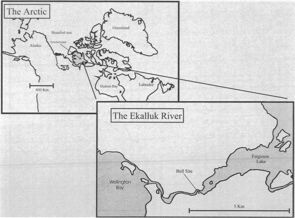 Map showing the location of the Ekalluk River and the Bell site. The river, which flows westward into Wellington Bay, functions as a natural funnel for migrating caribou.