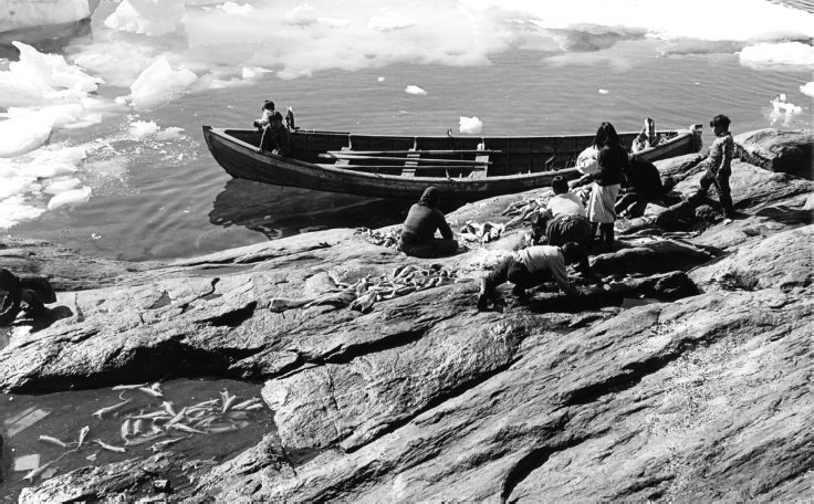 People preparing salmon near the shore, Diilerilaaq, 1967. Rowboats came into use in the early 1960s. Photo: G. Nooter, Museon 67-03-58-05.