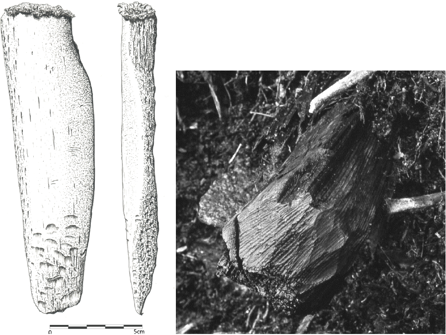 From left to right: a) Heavy wedge of whale bone (length: 170 mm), Qeqertasussuk (drawing: Lars Holten); b) In situ photo of a driftwood board split lengthwise and subsequently chopped into sections with an adze. At the end of the piece, adze chopping marks are seen, Qeqertasussuk (photo: Bjarne Grønnow)