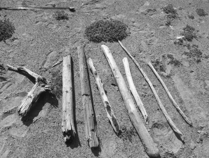 Driftwood gathered and shown to the elders during the interviews.