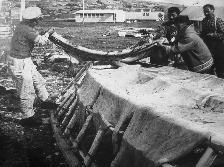 Building of a boat by fathers of interviewed elders in Ivujivik, 1960.