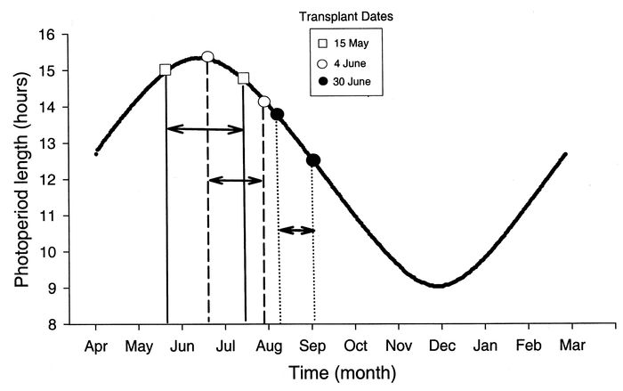 Photoperiod by month in Aurora, NY for the three Abutilon theophrasti transplant dates 15 May, 4 June, and 30 June.