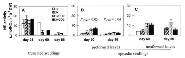 NR activity (µmol NO2 h-1 g-1 DW) of the preformed leaves of the truncated seedlings (A) and of the preformed (B) and neoformed leaves (C) of the episodic seedlings exposed under CO2, O3, and their combination at days 21, 60 and 86. Significant effects at P < 0.05 are indicated in the figures.