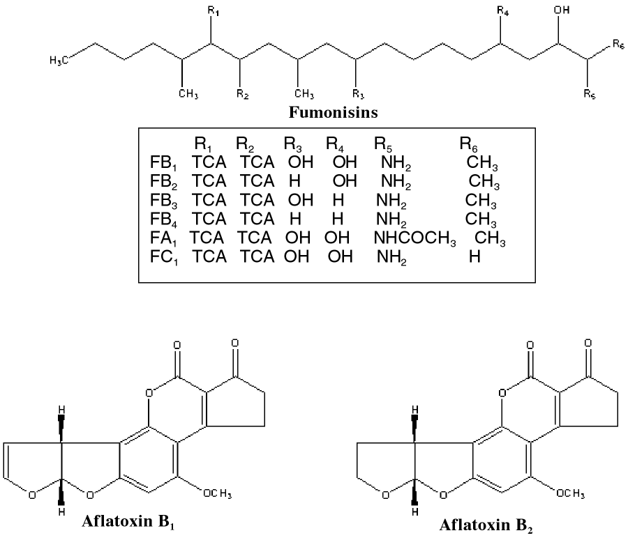 Chemical structures of aflatoxins B1 and B2, and various fumonisin analogs. TCA = tricarballylic acid (propane-1,2,3-tricarboxylic acid).