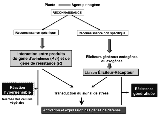Facteur Biotique Et Abiotique Pdf Download