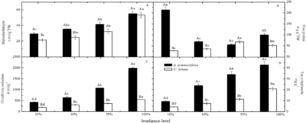 Contents of malondialdehyde (MDA) (A), free proline (Pro) (B), glutathione reductase (GR) (C), and tea polyphenols (TP) (D) in leaves of A. artemisiifolia (solid bars) and U. lobata (clear bars) under four irradiance treatments (10%, 30%, 55% and 100%).