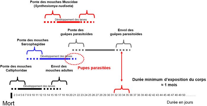 succession faunale relative datant